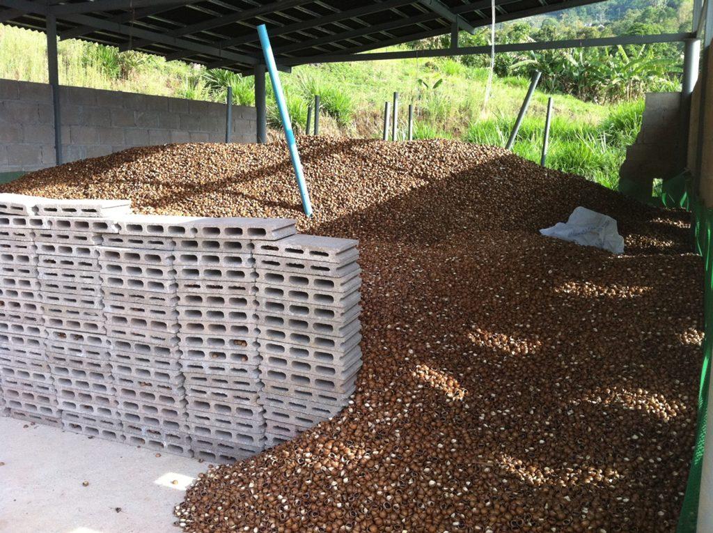macadamia nut shells